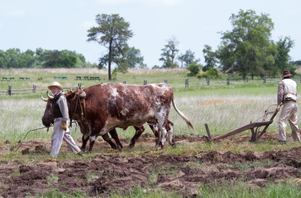 Oliver-Kelley-Farm-oxen-plowing